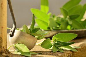 5 frische Kräuter zur Verbesserung Ihrer Gesundheit